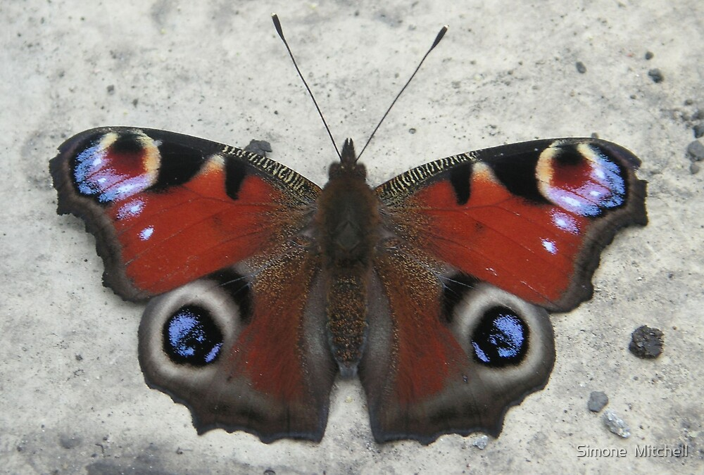 butterfly  by Simone  Mitchell