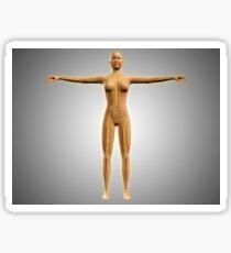 Anatomy of female body with nervous system. Sticker