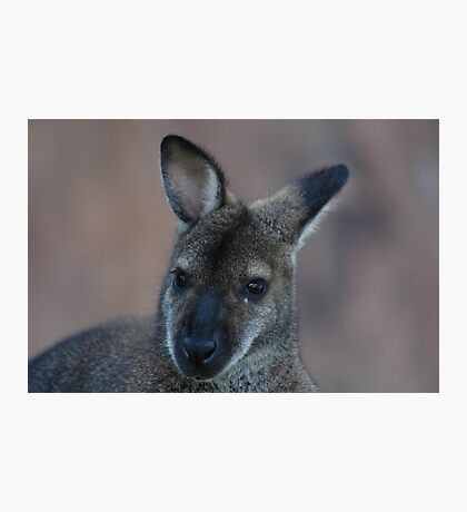 Wanna Be A Wallaby Photographic Print