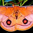Moth by helmutk