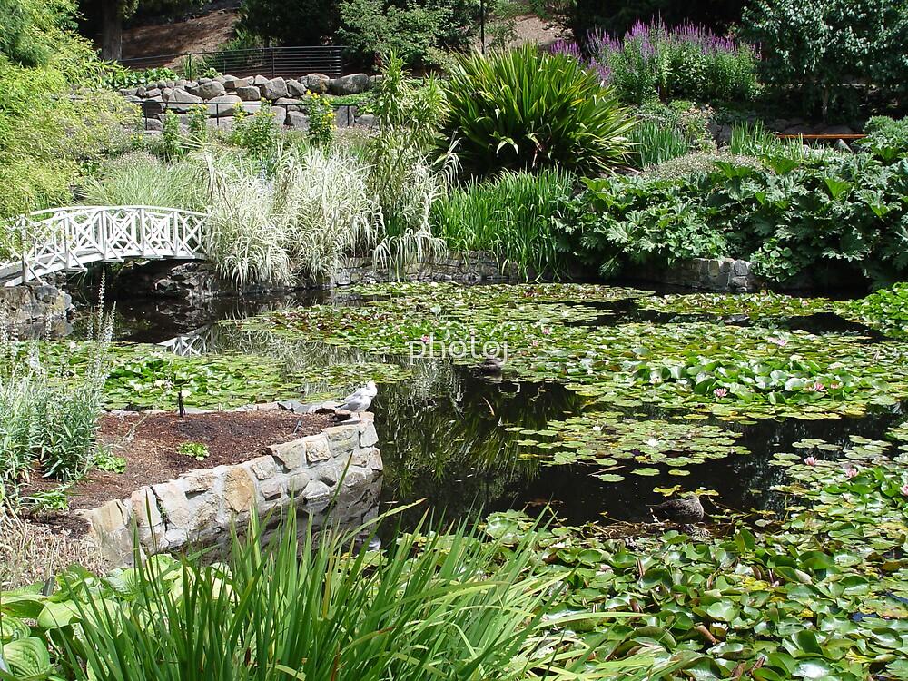 australia-tasmnia botanical gardens by photoj