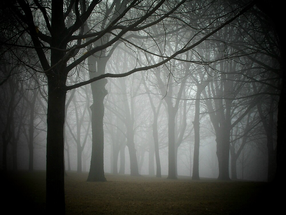 misty morning by tracyreese