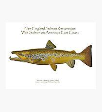 New England Salmon Photographic Print