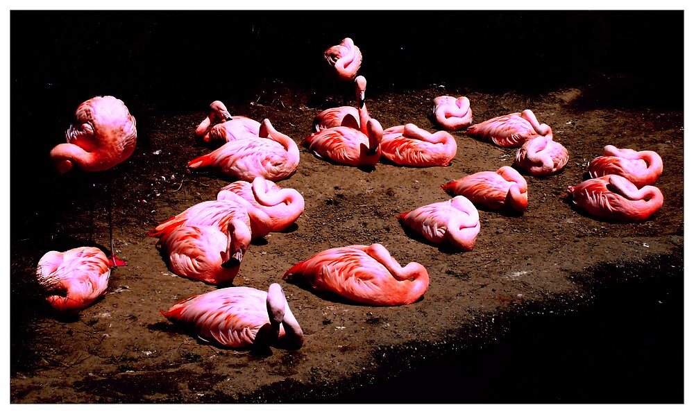 Electric Pink Flamingos by Sheritabee