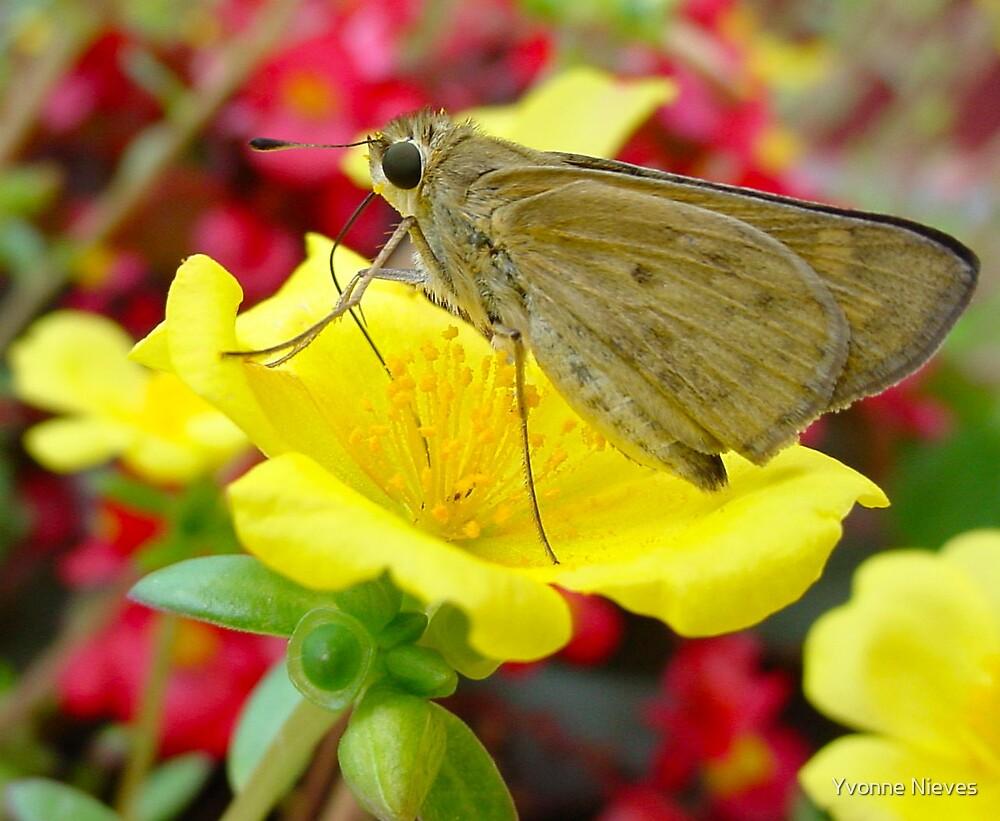 Pollen Fun by Yvonne Nieves
