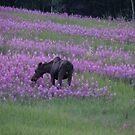 Moose In Fireweed by Beth M. Hughes