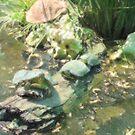 Tortugas by marcocreazioni