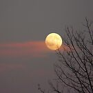 Thanksgiving Moon by MaeBelle