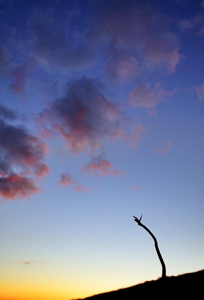 Heaven and Earth by David Haviland