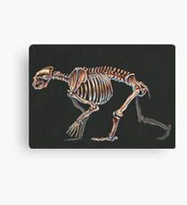 Arctodus Simus Skeletal Study (No Labels) Canvas Print