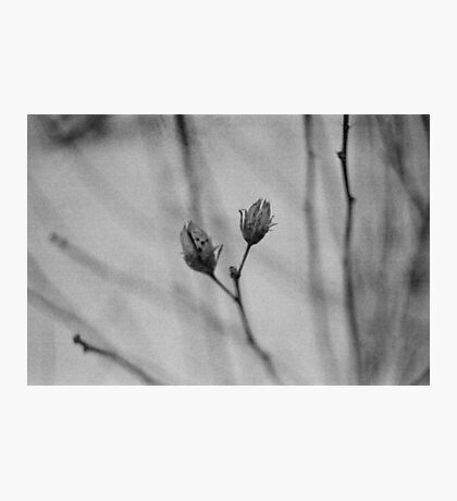 the short hours of winter. Photographic Print