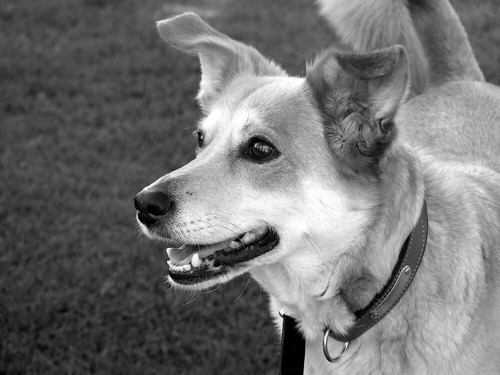 happy dog by legin2068