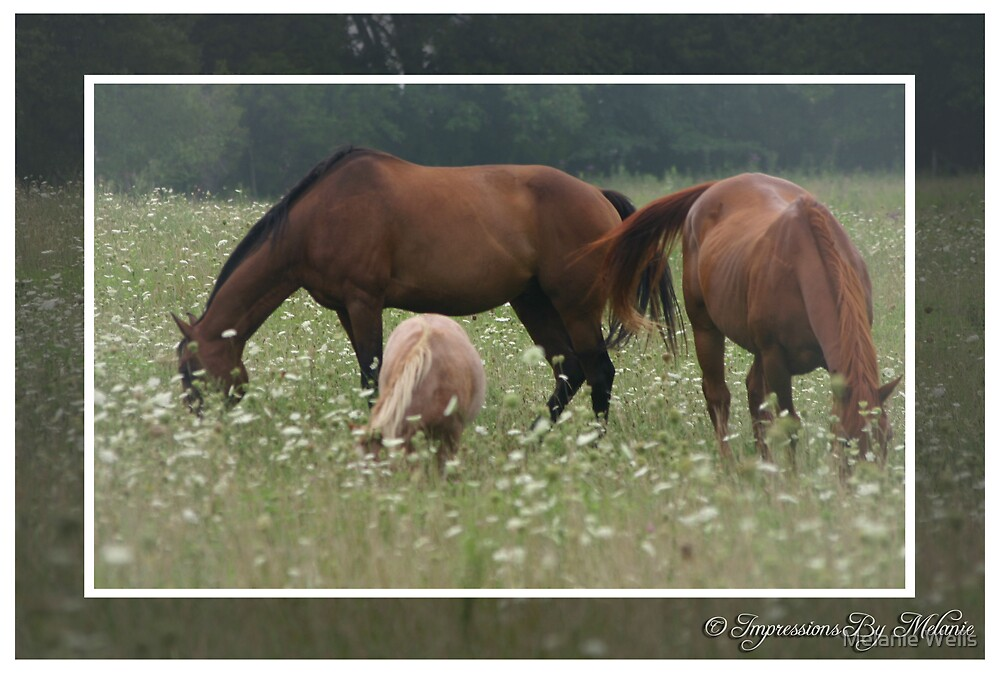 The Grazing by Melanie Wells