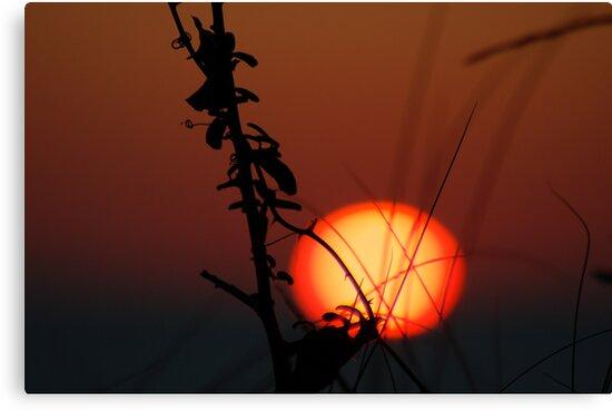Crimson Sunset by shanpals