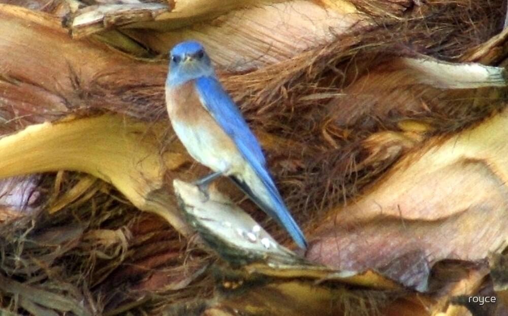 LIL BIRD IN PALM TREE by royce