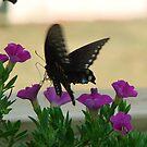 Butterfly Landing on a Flower by ekehoe