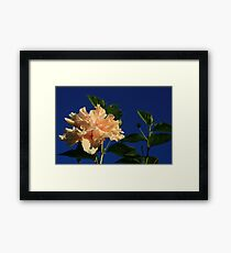 Peach Passions Framed Print