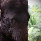 Elephant portrait 1 by fab2can