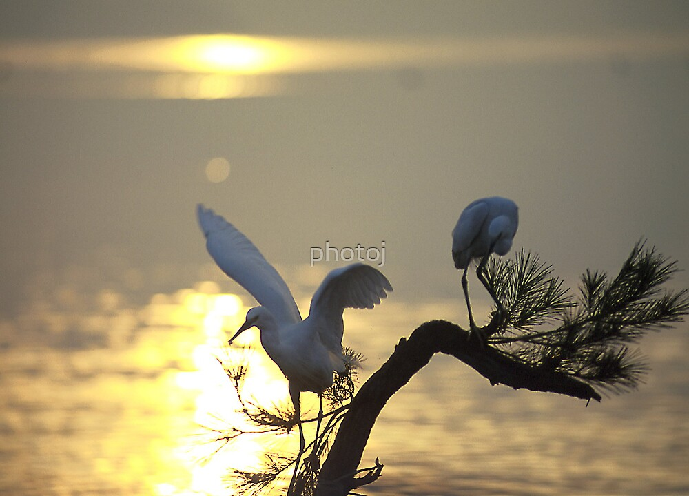 photoj animal-bird at sunset by photoj