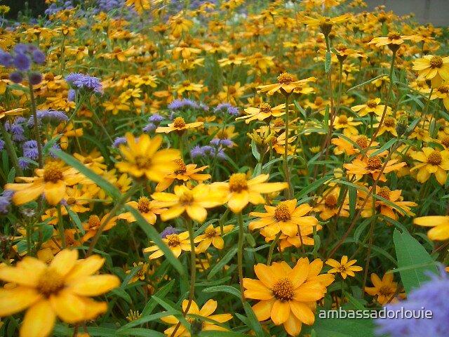 fields of gold by ambassadorlouie