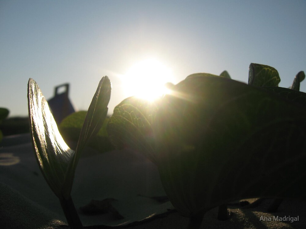 Emerging Leaf by Ana Madrigal