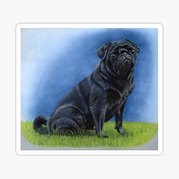 Little Black Pug Portrait Sticker
