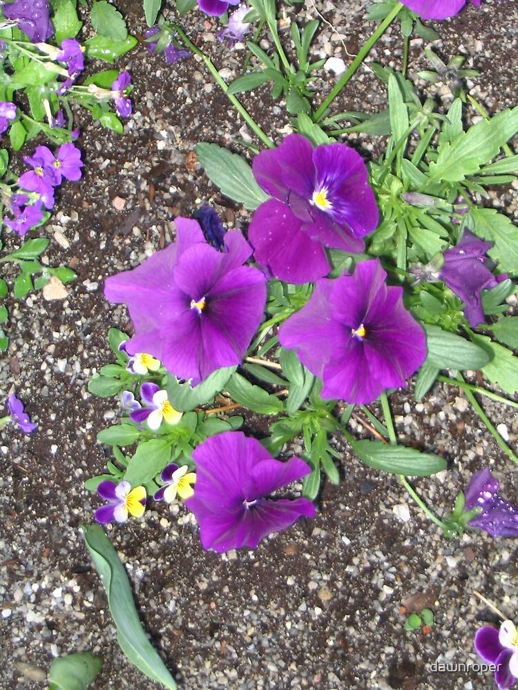 Purple by dawnroper