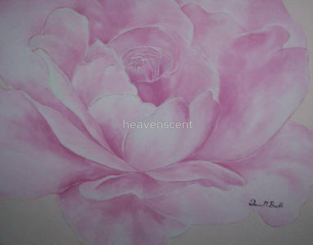 my pink rose by heavenscent