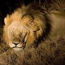 The lion sleeps tonight... by Erik Schlogl