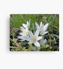 Grass Lilies Canvas Print