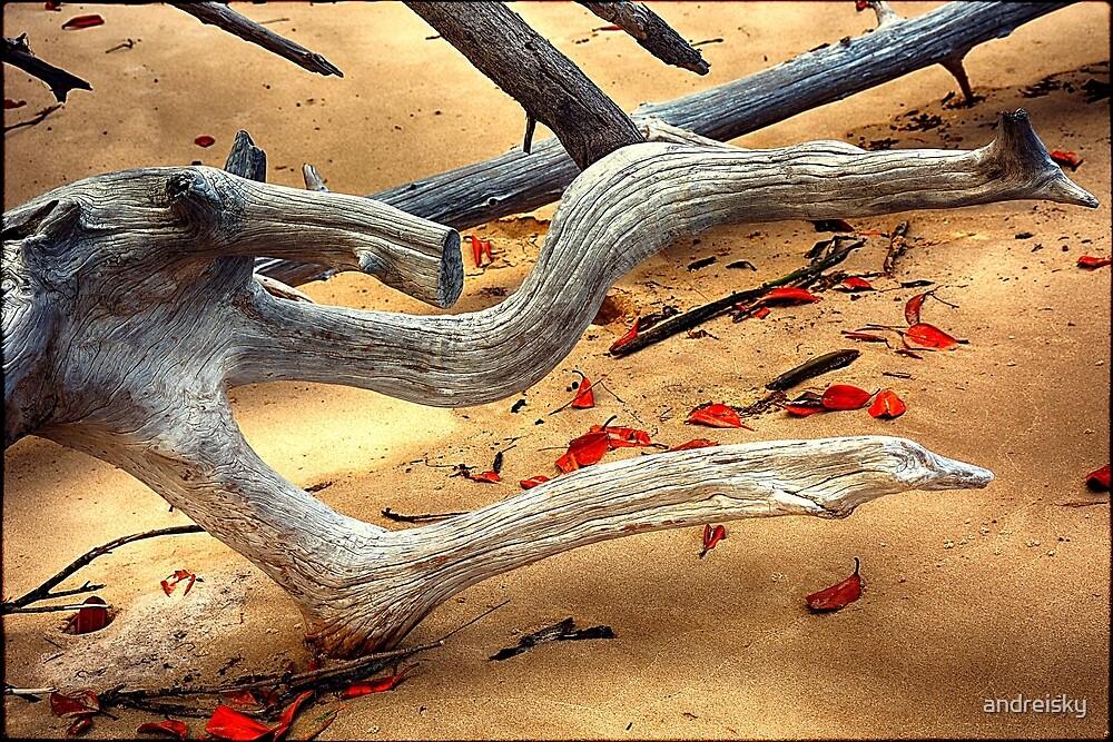 Driftwood II by andreisky