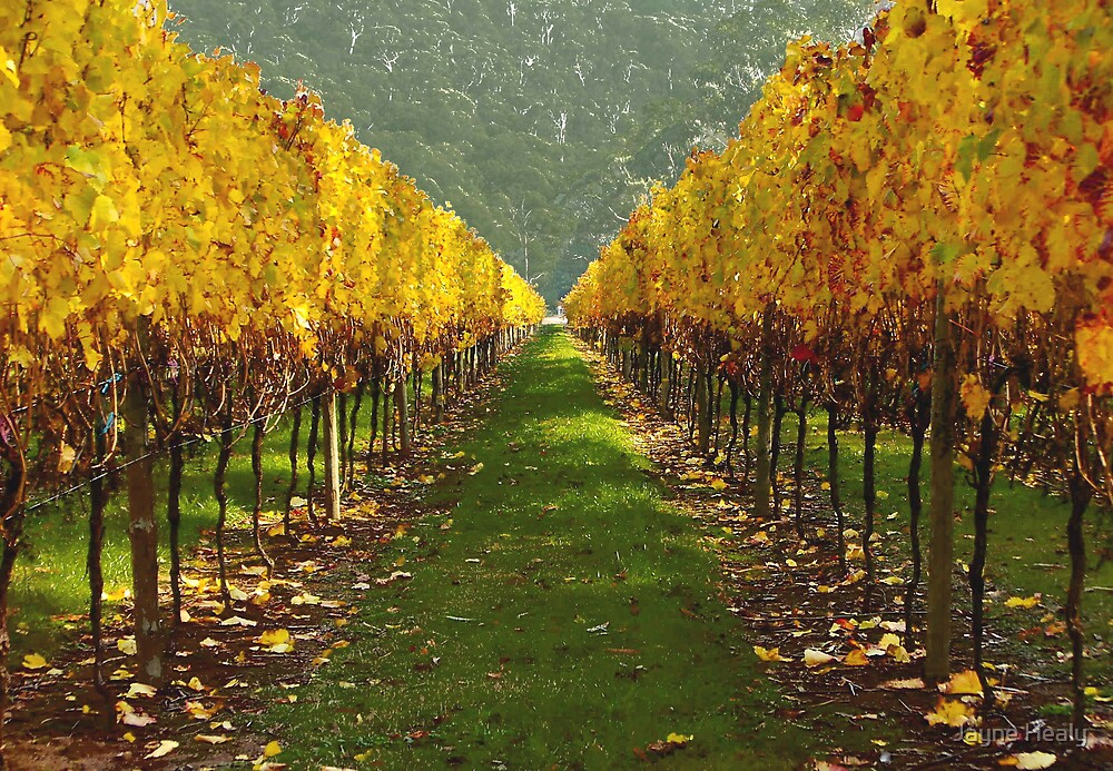'Autumn vineyard' by Jayne Healy