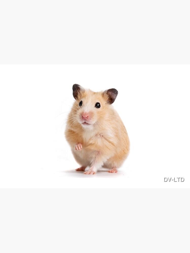 Cute Hamster Rodent  by DV-LTD