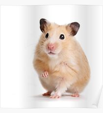 Cute Hamster Rodent  Poster