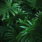 Jungle Leaves by BadBehaviour