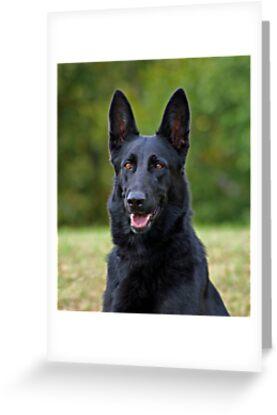 Black german shepherd greeting cards by sandy keeton redbubble black german shepherd by sandy keeton m4hsunfo
