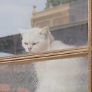 Cat in window by fab2can