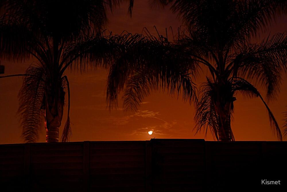 The moon between palms by Kismet