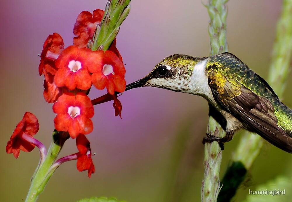 Taking A Punch Break by hummingbird