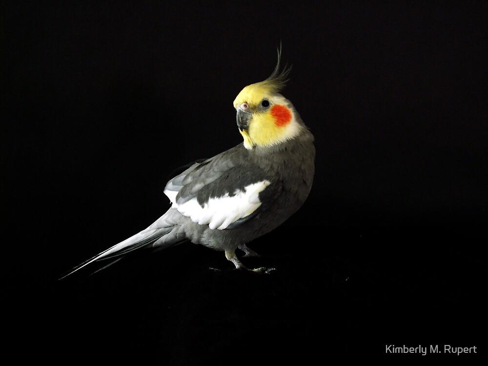 A Pretty Bird    by Kimberly M. Rupert