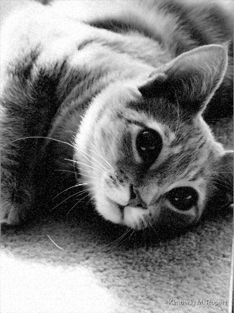 Kitty-Kitty by Kimberly M. Rupert