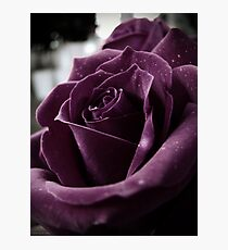 Purple Rose II Photographic Print