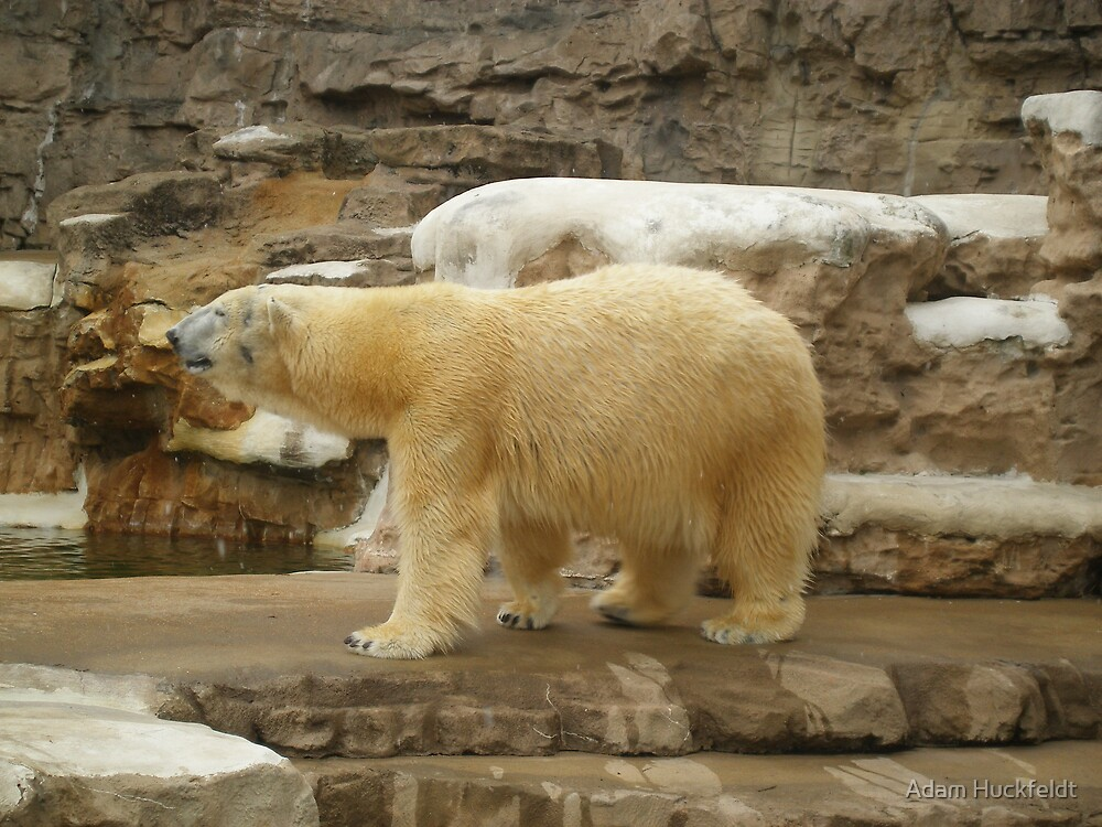 Its good to be a bear. by Adam Huckfeldt
