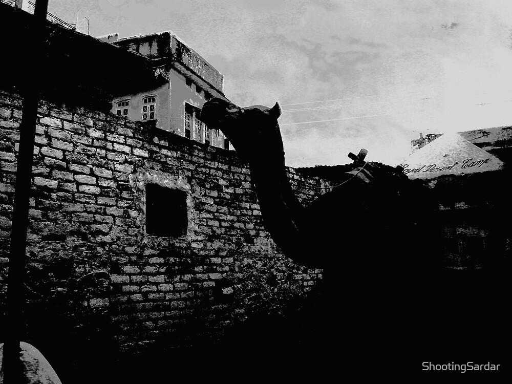 Camel @ Pushkar by ShootingSardar