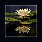 Reflected water lily by Maryna Gumenyuk