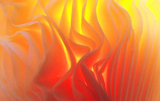 Folds of fire by Janice E. Sheen