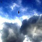 High Flyer by ShootingSardar