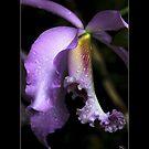 Purple Orchid by Maryna Gumenyuk