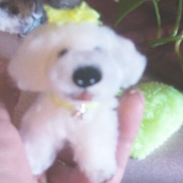 bichon pup miniature by francelle by franniesbest