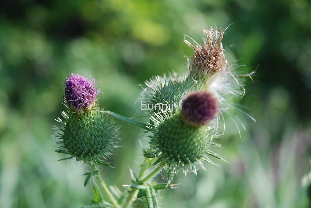 Purple Bloom by bunnij
